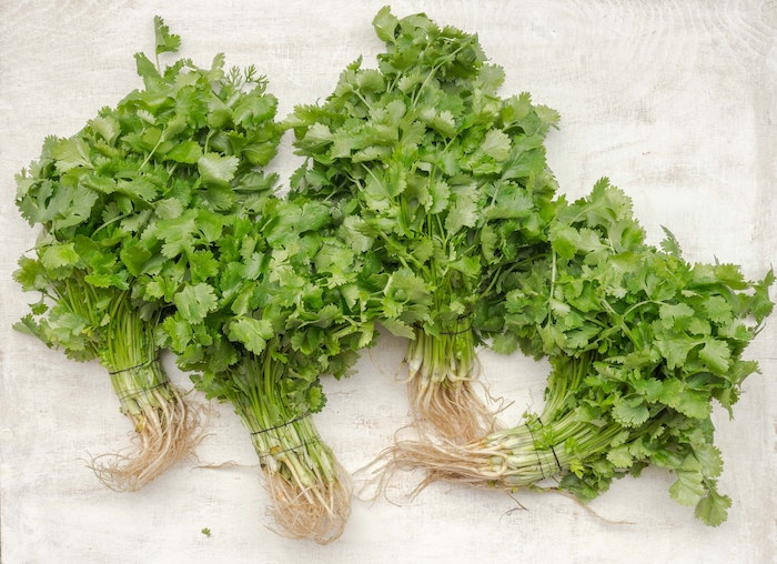 4 bunches of cilantro, an herb that grows in shade, lying on a white background.