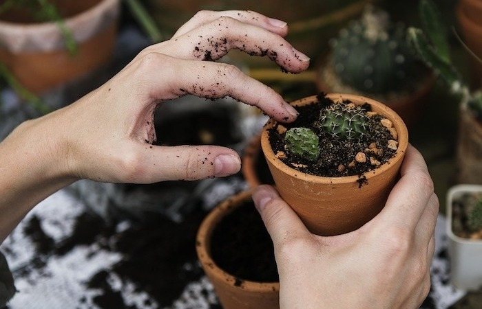 planting succulents in clay pots