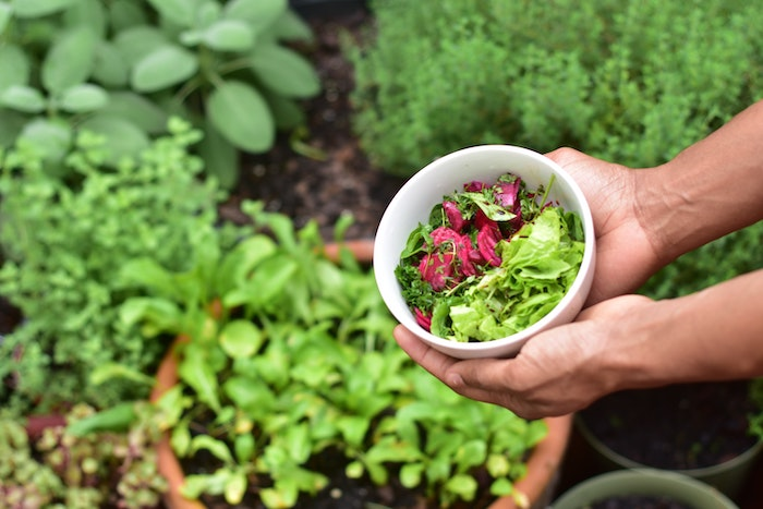 salad bounty from vegetables that grow in shade
