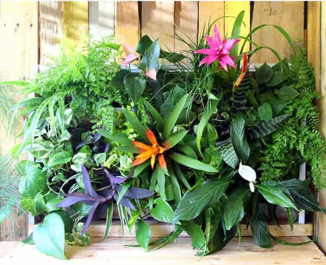 tropical plants make a living wall garden from recycled wooden pallets
